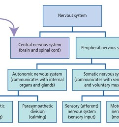 divisions of nervous system [ 1442 x 735 Pixel ]
