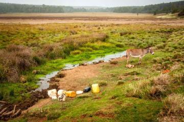 Enyapuiyapui Swamp. Source of the Mara River. photo No Water No Life