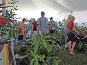 plant sale shoppers