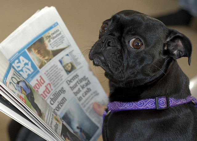 Photo: Steve Eng, Dog Reads Newspaper? via Flickr
