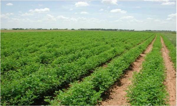 السودان فرض رسوم إضافية على الزراعة في موازنة 2019