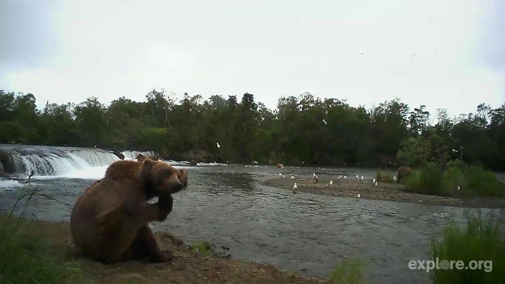 Bear Scratch