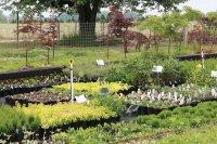 Backyard Success: Mike McGroarty Educates Aspiring Growers ...