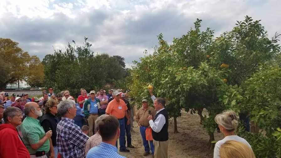 Georgia Citrus Association grove tour meeting