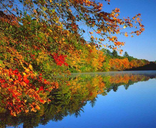 Free Wallpaper Fall Flowers صور الطبيعة فى فصل الخريف