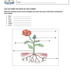 parts of a flower-bugs and insects worksheet [ 1291 x 1000 Pixel ]