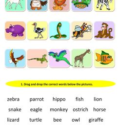 Animals and their body parts worksheet [ 1411 x 1000 Pixel ]