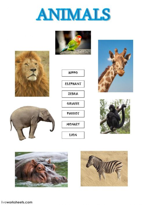 small resolution of Zoo animals worksheet