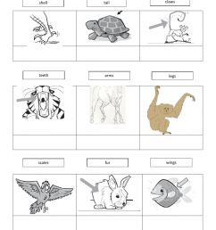 Parts of the animals worksheet [ 1413 x 1000 Pixel ]