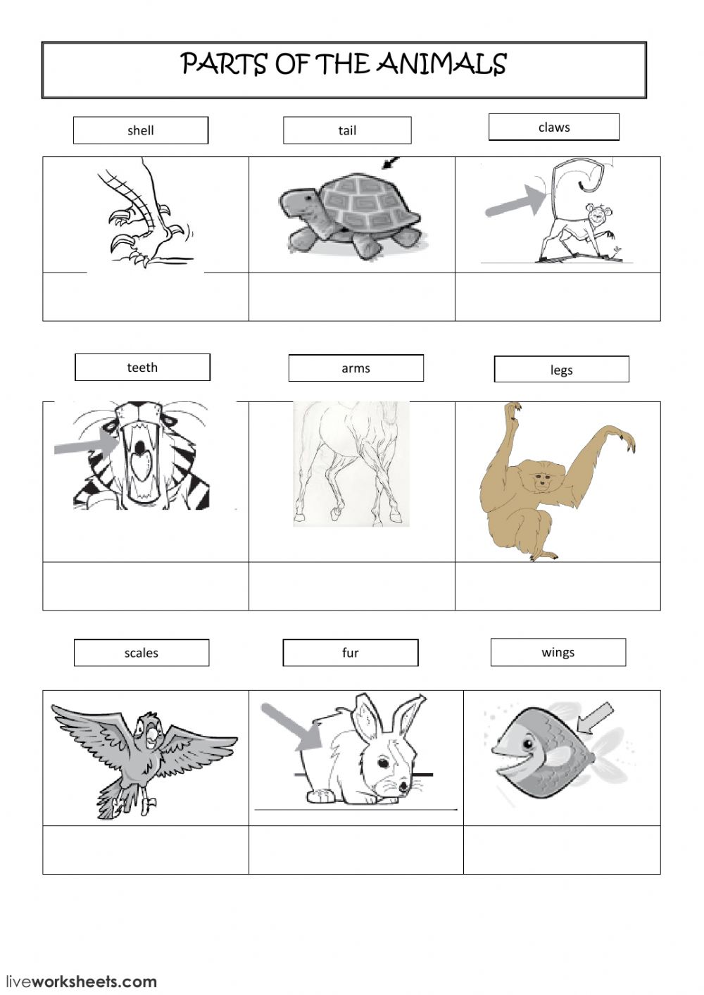 medium resolution of Parts of the animals worksheet