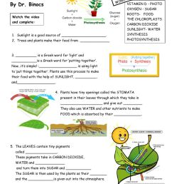 Video-worksheet PHOTOSYNTHESiS worksheet [ 1291 x 1000 Pixel ]
