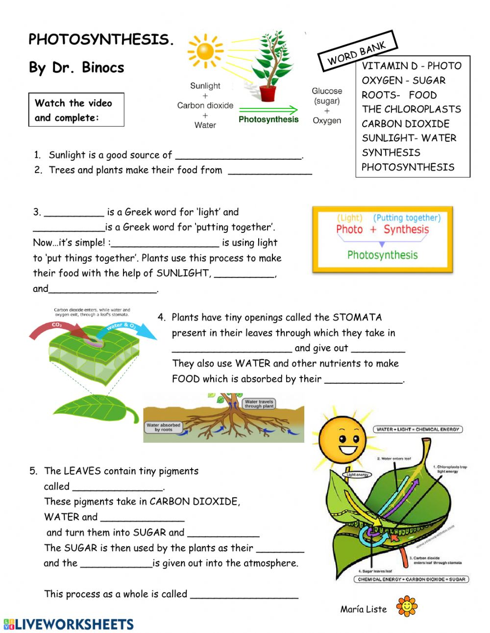 medium resolution of Video-worksheet PHOTOSYNTHESiS worksheet