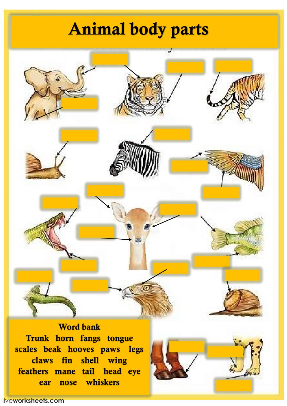 hight resolution of Animal body parts activity