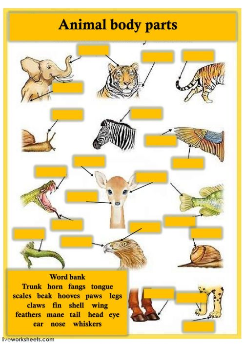 small resolution of Animal body parts activity