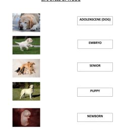 Life cycle of a dog worksheet [ 1413 x 1000 Pixel ]