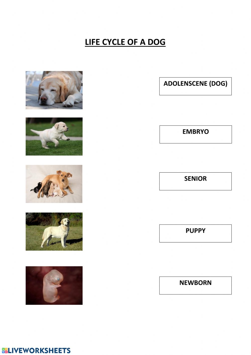 hight resolution of Life cycle of a dog worksheet