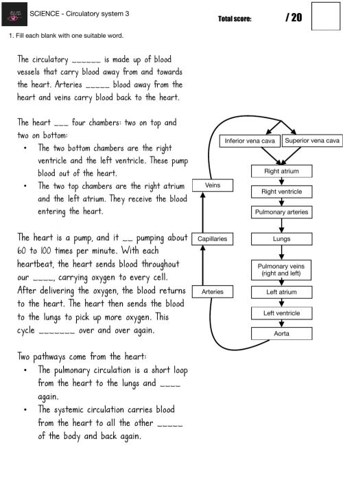 small resolution of SCIENCE - Circulatory system worksheet