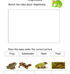 Amphibians activity for 2nd year [ 1291 x 1000 Pixel ]