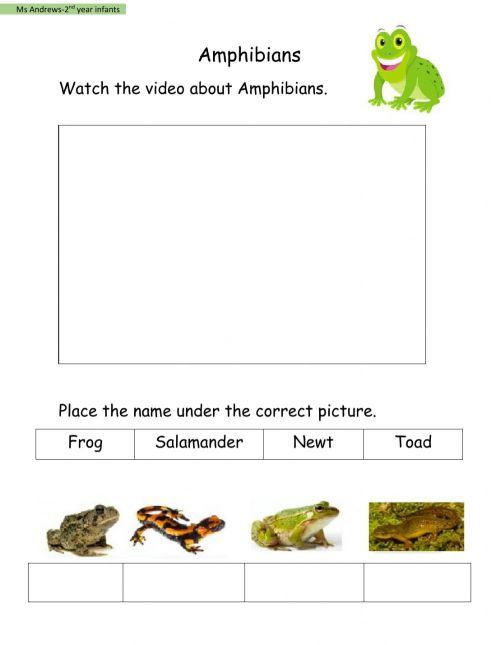 small resolution of Amphibians activity for 2nd year