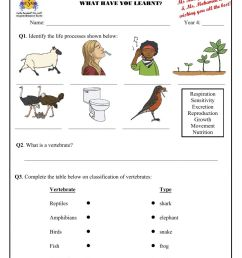 Revision - Humans and Animals worksheet [ 1291 x 1000 Pixel ]