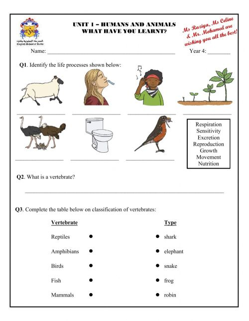 small resolution of Revision - Humans and Animals worksheet