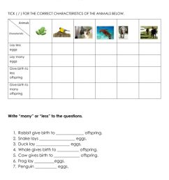 Animals Lay Eggs and Give Birth worksheet [ 1413 x 1000 Pixel ]