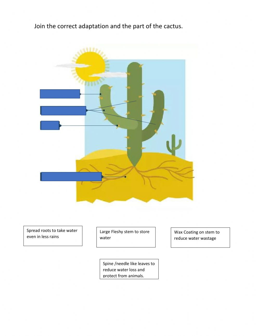 hight resolution of Cactus adaptations worksheet