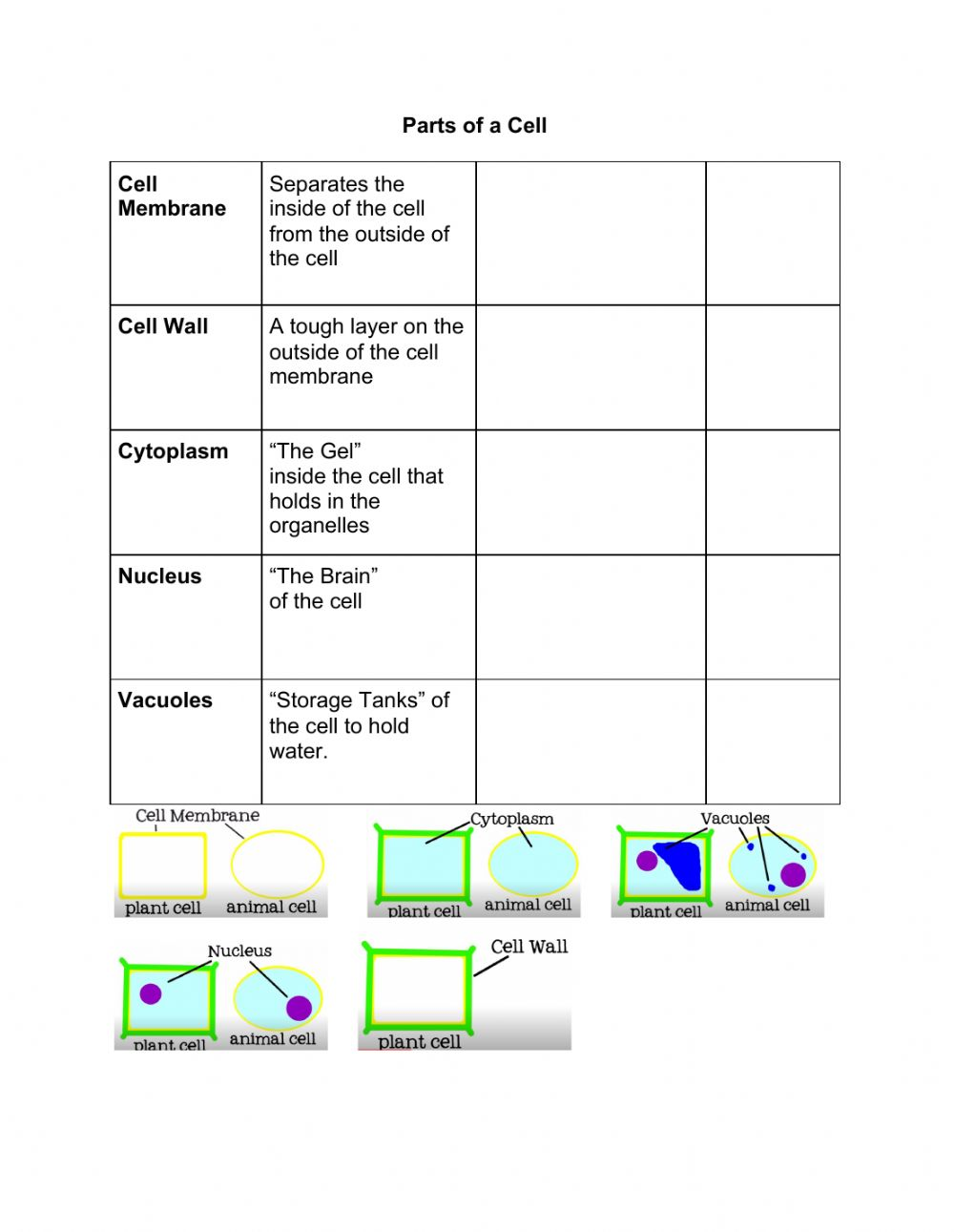 hight resolution of Parts of a Cell interactive worksheet