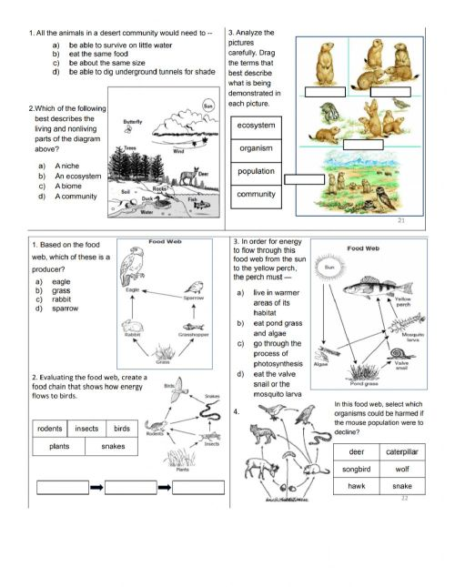 small resolution of 4.3 Science Quiz worksheet