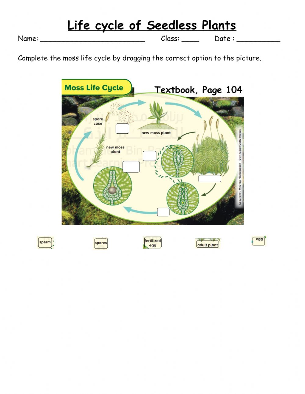 hight resolution of Life cycle of seedless plant worksheet