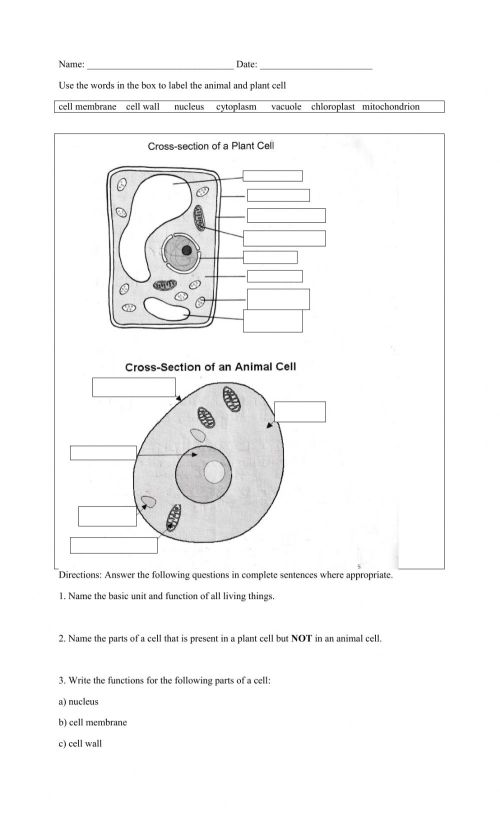 small resolution of What is a cell worksheet
