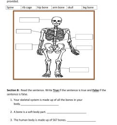 IDU- Skeletal System worksheet [ 1643 x 1000 Pixel ]