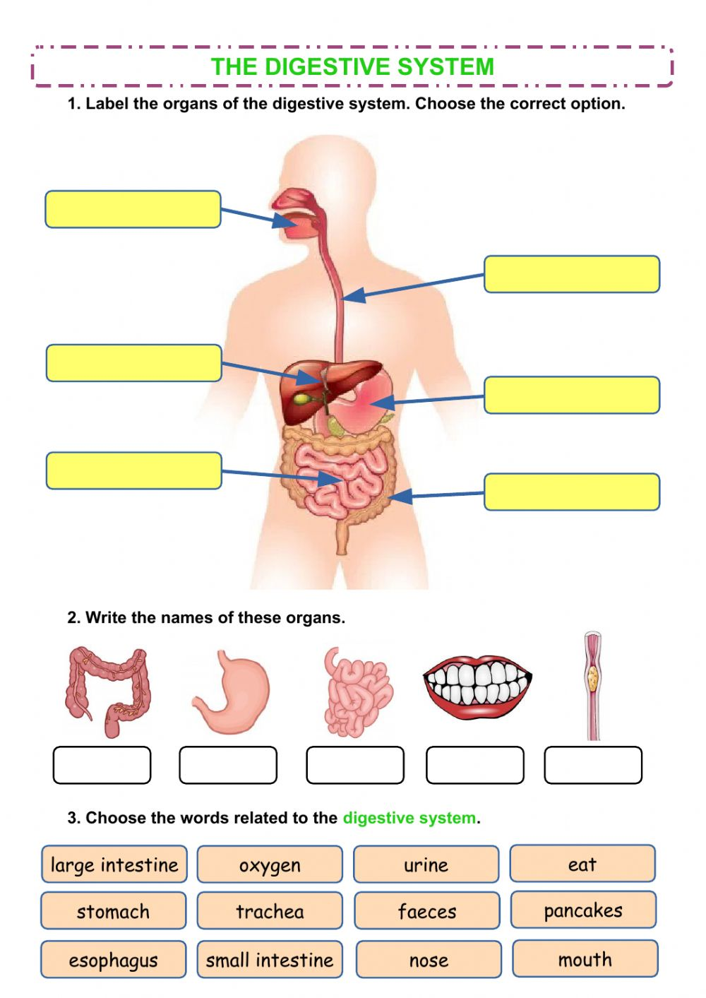 hight resolution of The digestive system worksheet for Grade 2