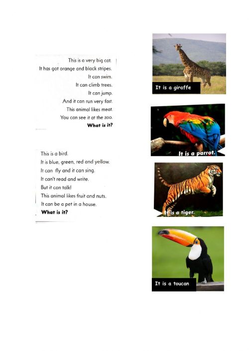 small resolution of Guess the animal online worksheet for 2nd grade