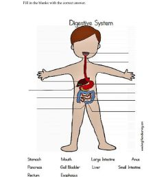 Digestive System activity for Grade 6 [ 1291 x 1000 Pixel ]