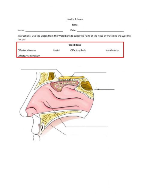 small resolution of Nose worksheet
