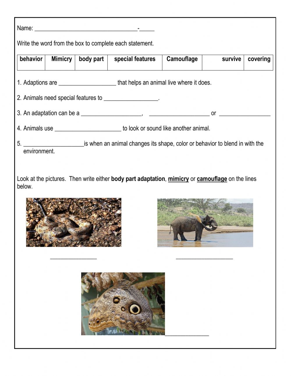 hight resolution of Animal Adaptation interactive worksheet