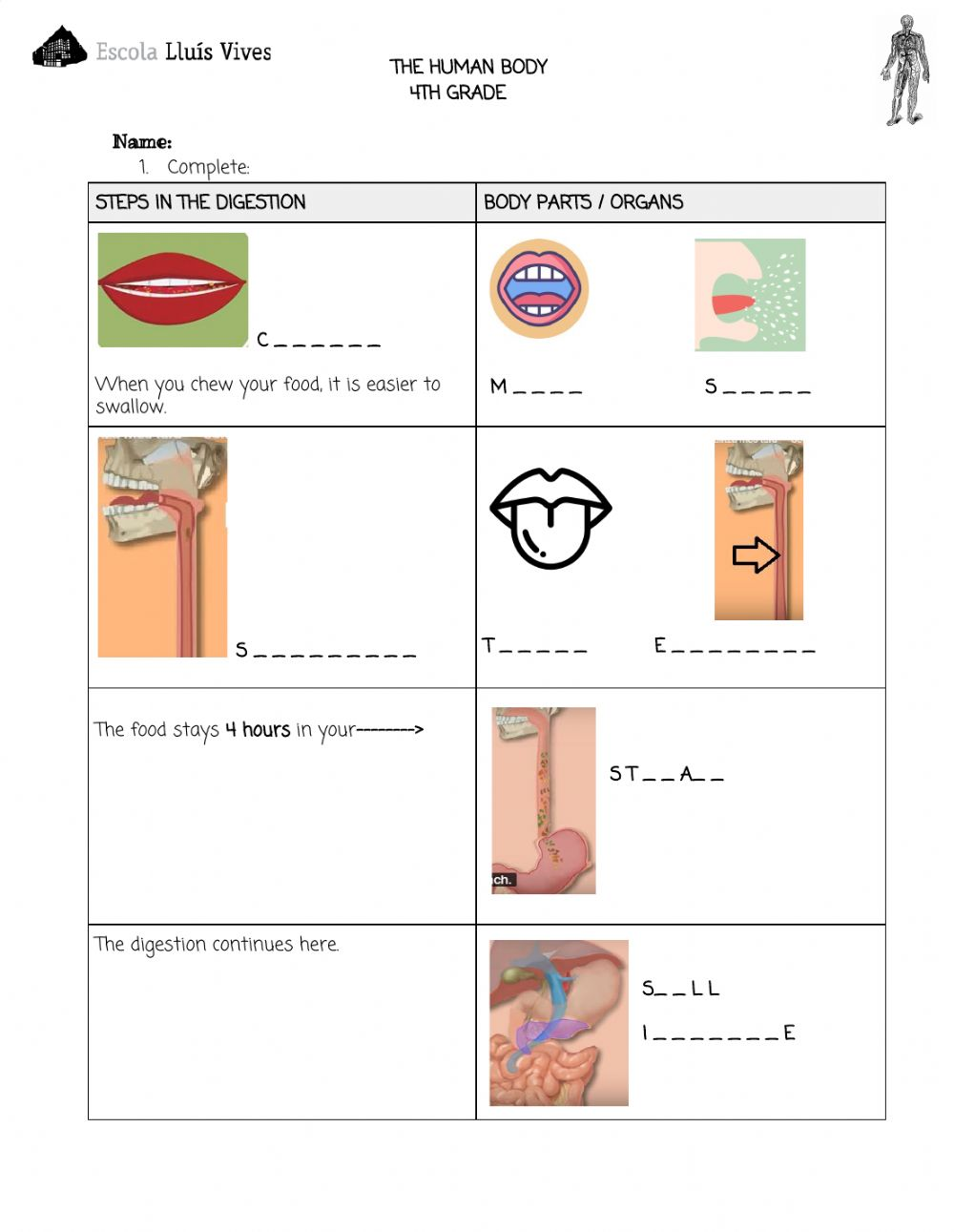 hight resolution of 4th.The human body. DIGESTIVE SYSTEM worksheet