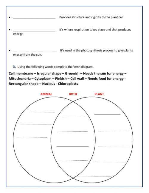 small resolution of Animal and Plant Cell worksheet