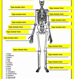 Skeletal System online activity for 7 [ 1291 x 1000 Pixel ]