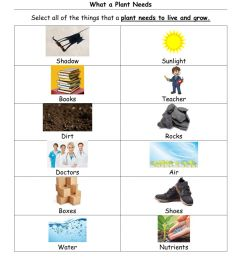 What a plant needs and parts of a plant worksheet [ 1291 x 1000 Pixel ]