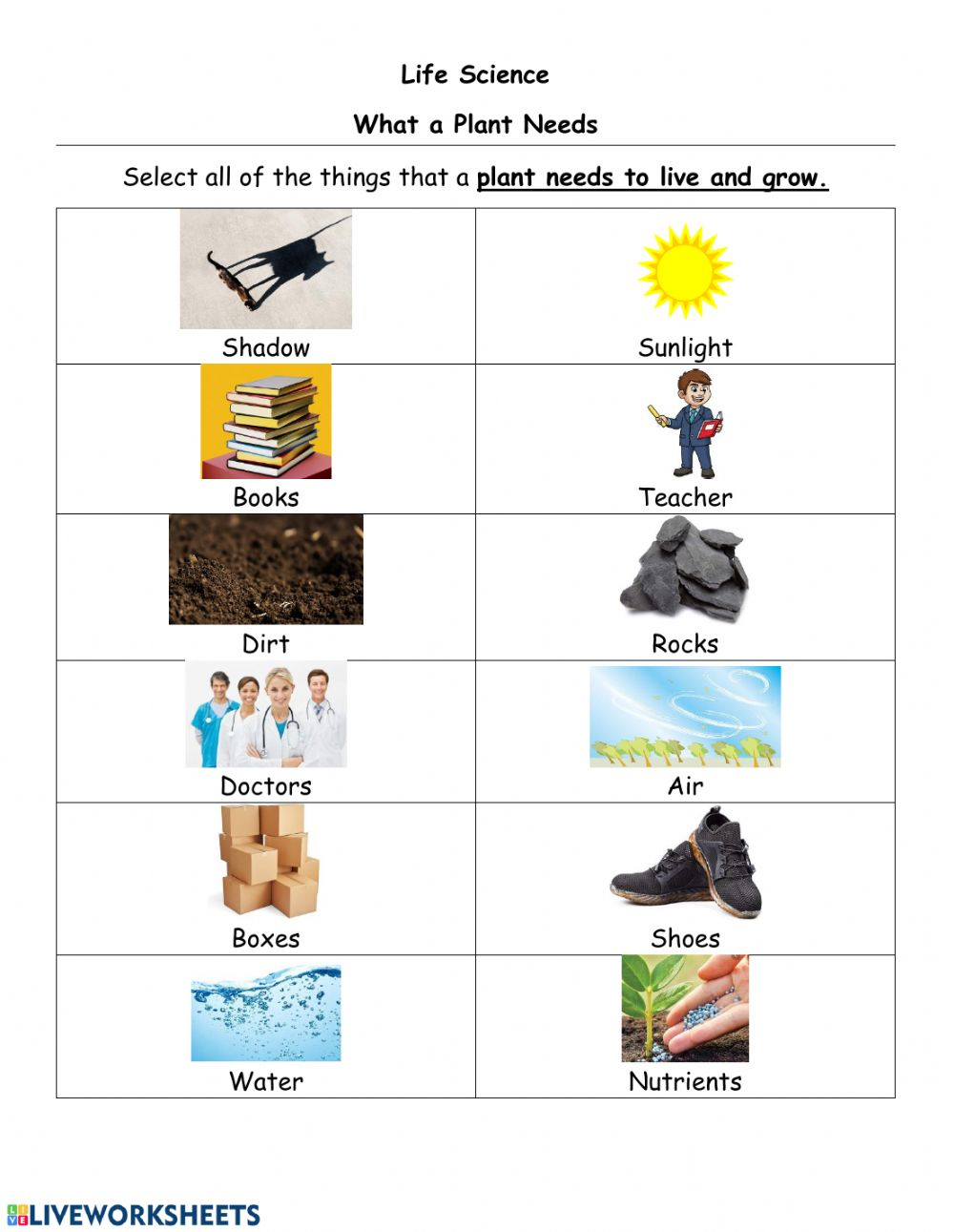 hight resolution of What a plant needs and parts of a plant worksheet