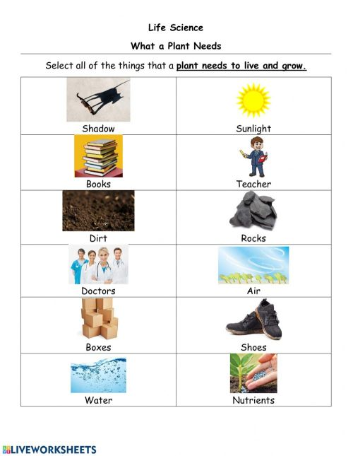 small resolution of What a plant needs and parts of a plant worksheet