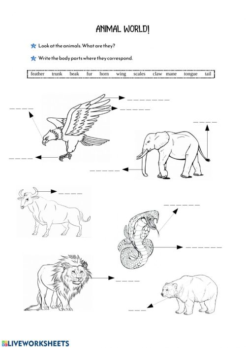 small resolution of Animals' Body Parts worksheet