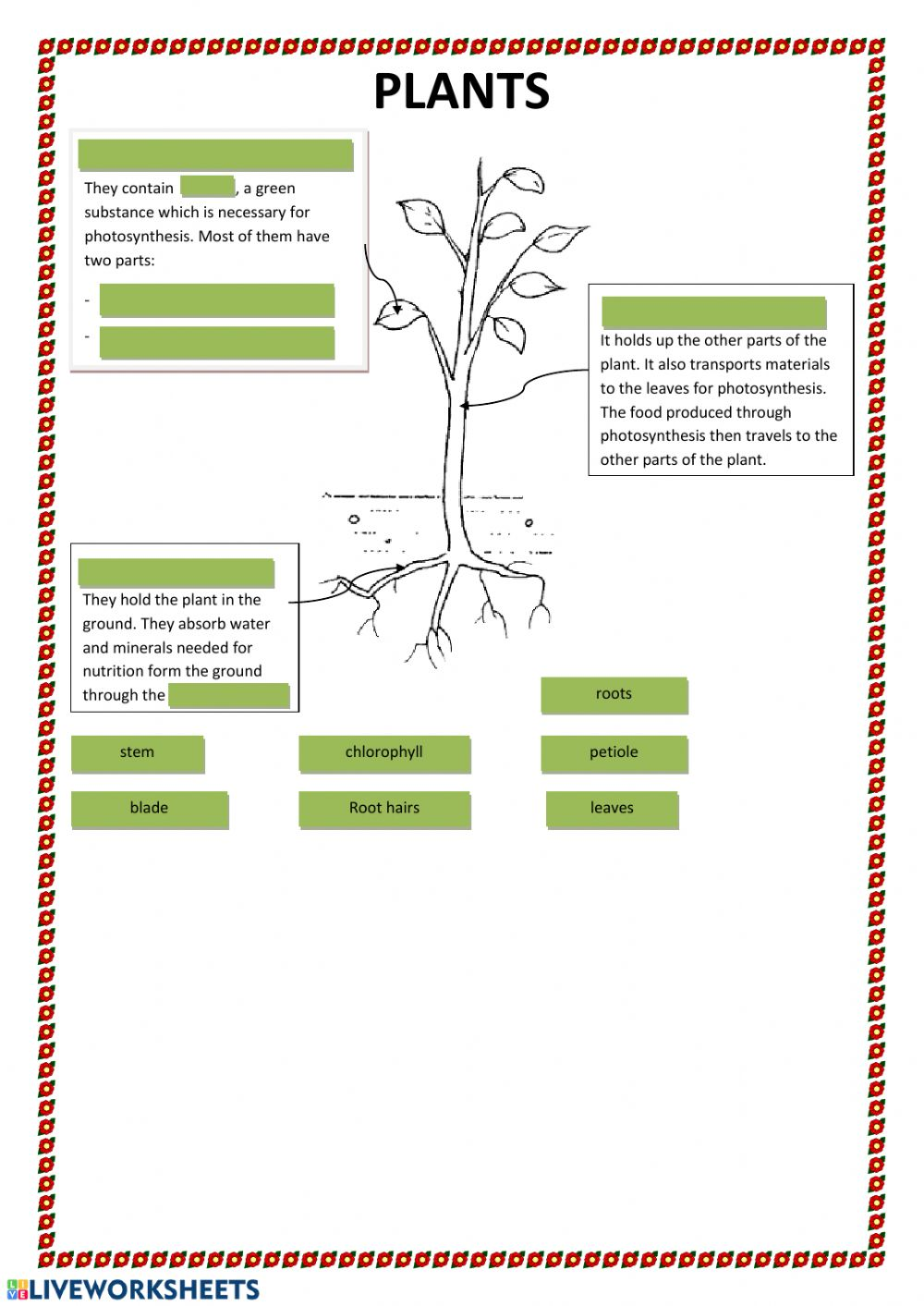hight resolution of Parts of plants interactive worksheet