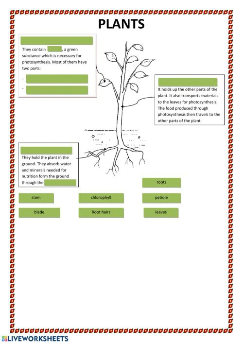 small resolution of Parts of plants interactive worksheet