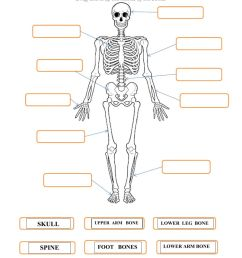 Skeleton worksheet [ 1413 x 1000 Pixel ]