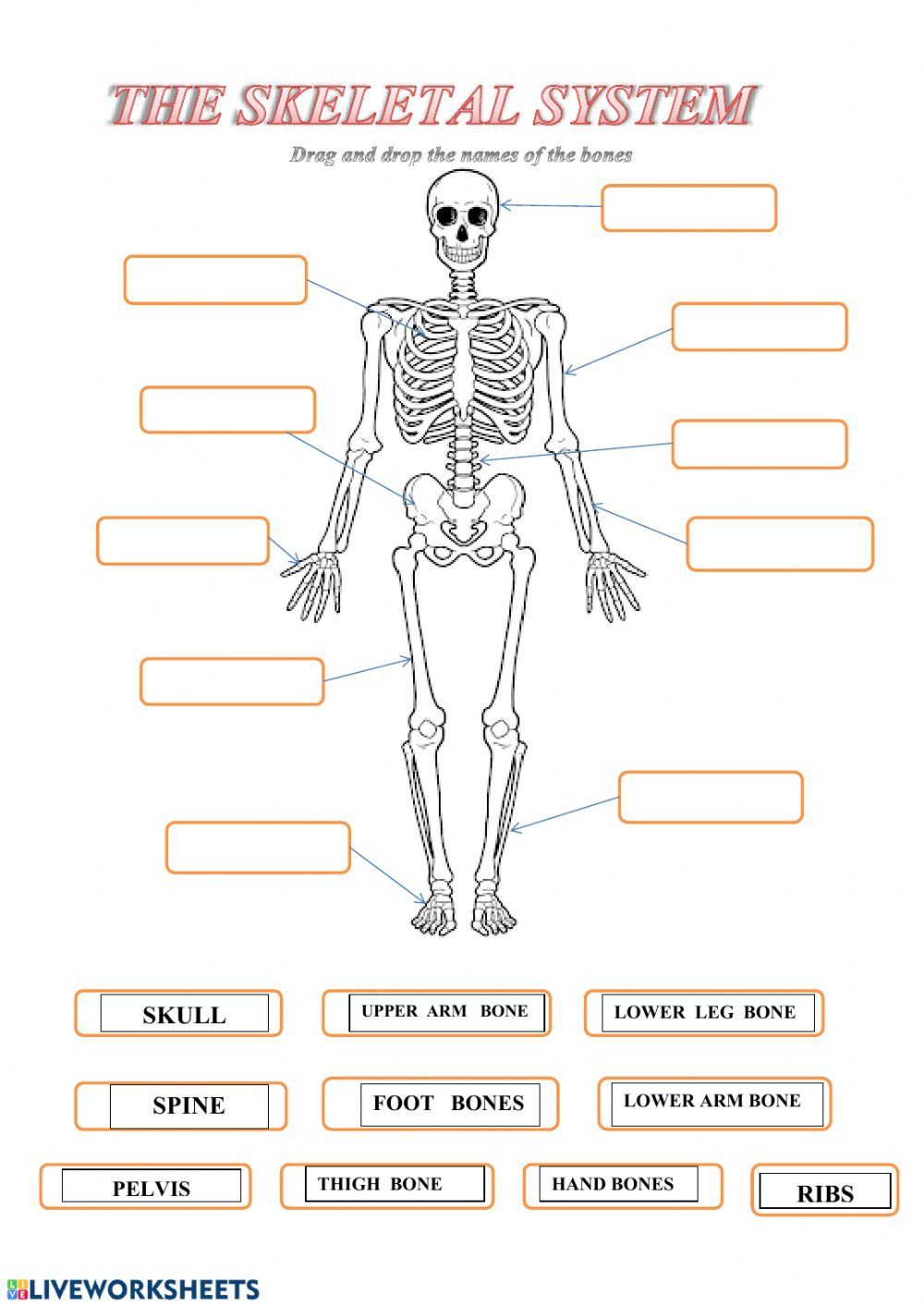 hight resolution of Skeleton worksheet