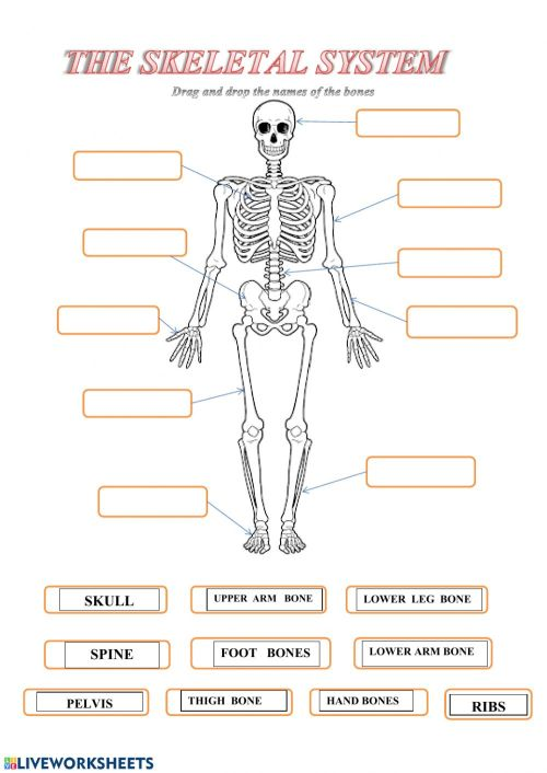 small resolution of Skeleton worksheet