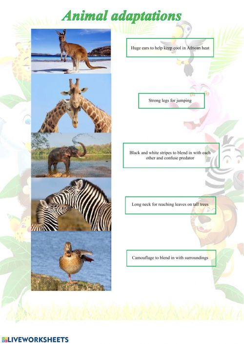 small resolution of Animal adaptations worksheet